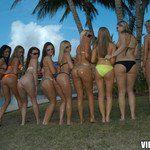 vipcrew.com ivy